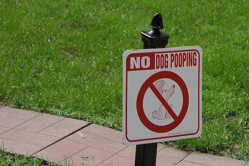 Dog-Poop-on-Lawn