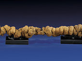23 million year old prehistoric poo up for auction